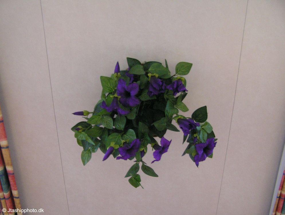 Tor Petunia 38